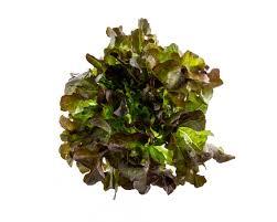 Dubový salát   Farma Ráječek